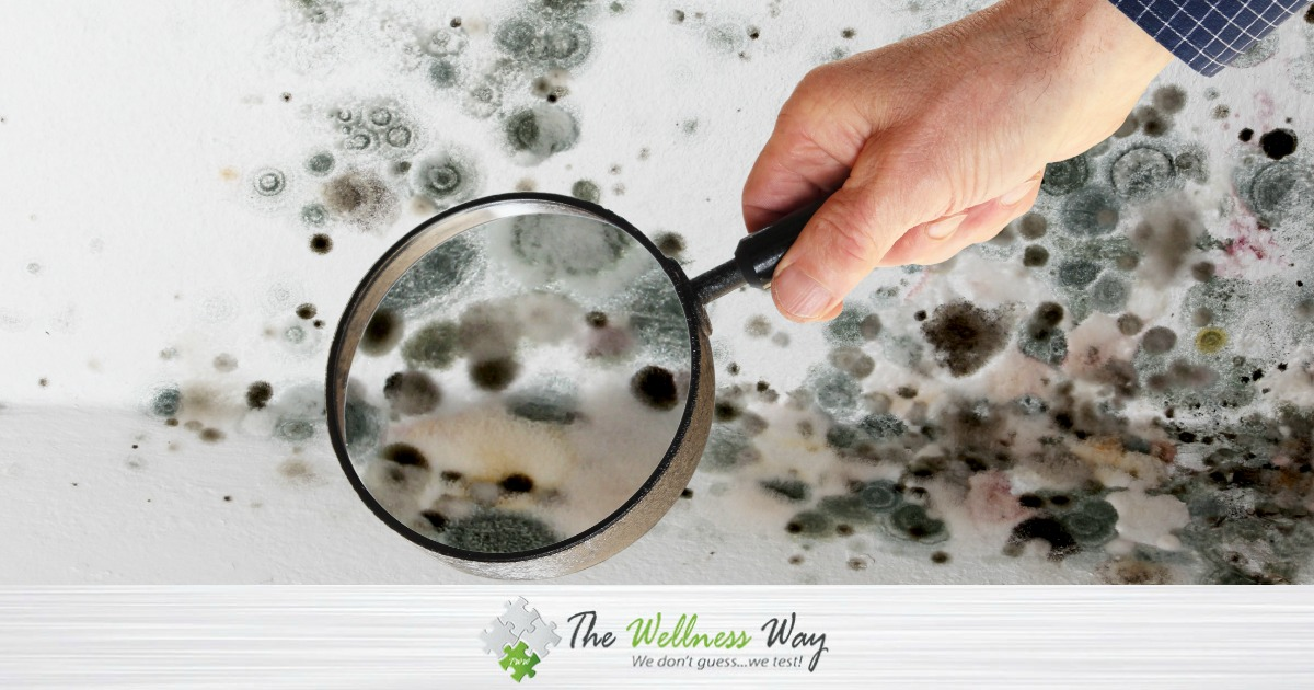 Mold: What You Need to Know