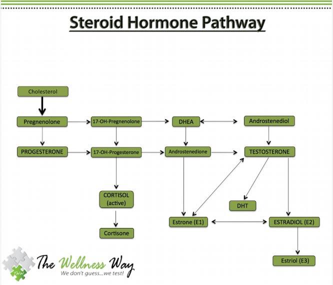 Steroid hormone pathway chart dragon age gold demon pendant