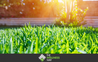 Lawn pesticides and health | The Wellness Way